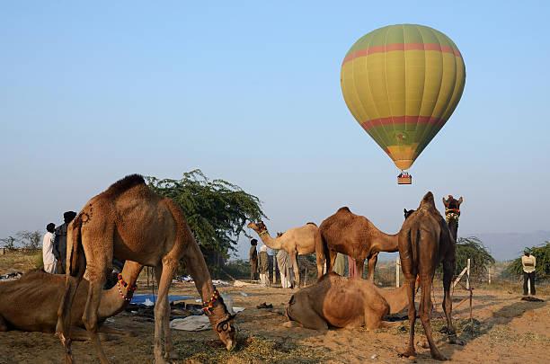 hot air balloon flying over tribal nomad,Pushkar,India stock photo