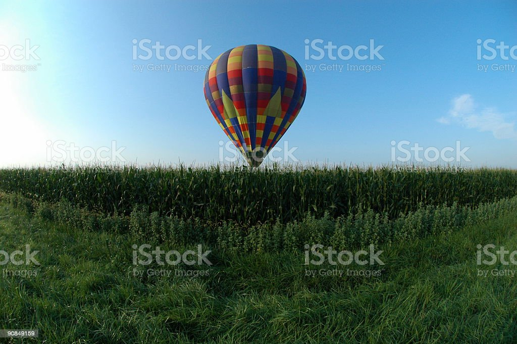 Hot air balloon flying very low over cornfield stock photo