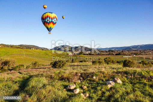 Hot air balloons floating over green vineyards at sunrise with blue sky and copy space, in Napa Valley, California, USA.