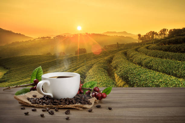 Hot coffee cup with fresh organic red coffee beans and coffee roasts on the wooden table and the black background with copyspace for your text. Hot coffee cup with fresh organic red coffee beans and coffee roasts on the wooden table and the plantation background with copy space for your text. cafe stock pictures, royalty-free photos & images