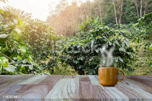 1135319558 istock photo Hot coffee cup with fresh organic red coffee beans and the roasted coffee beans on the wooden table and the plantations background with copy space for your text. 1167574877