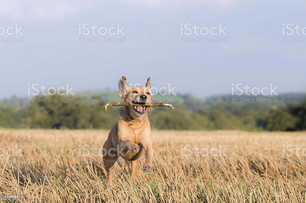 hot dog! stock photo