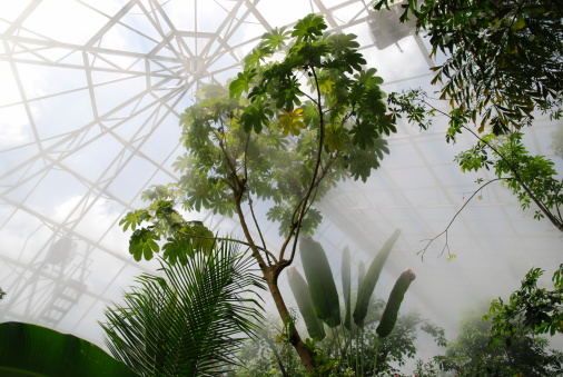 interior of hot and steamy tropical conservatory