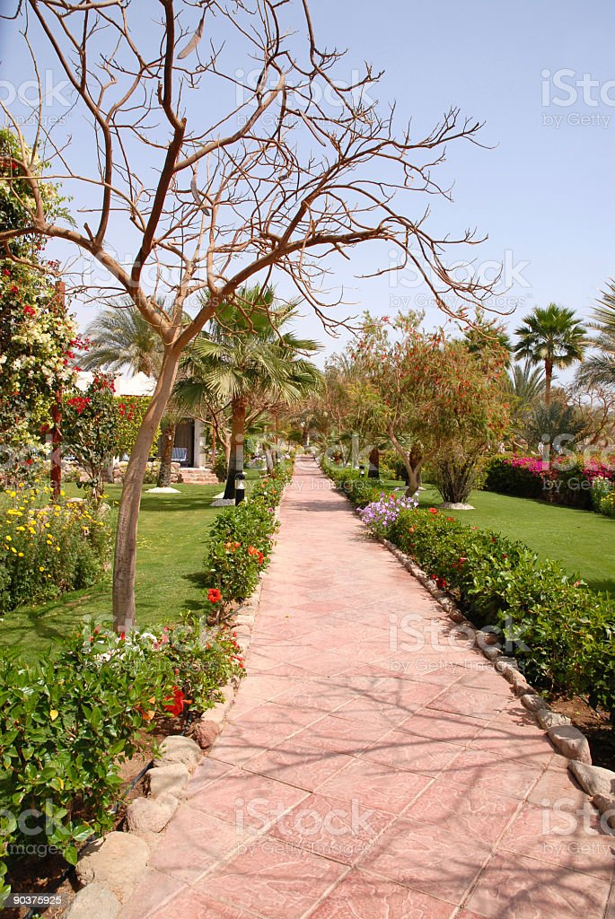 Landscaped tropical garden with paving stones,Egypt.