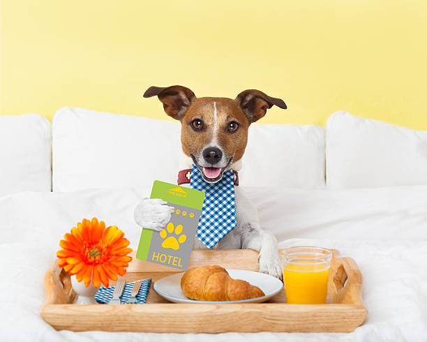 hotel room service wtih dog stock photo