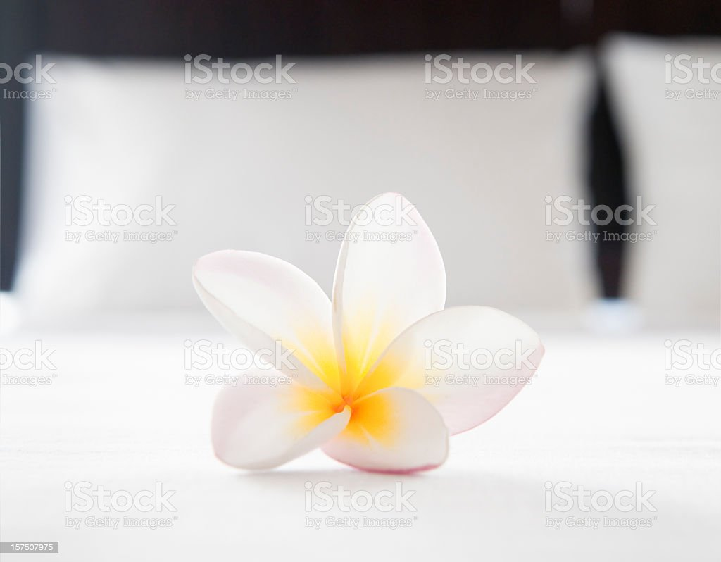 Hotel Room Welcome royalty-free stock photo