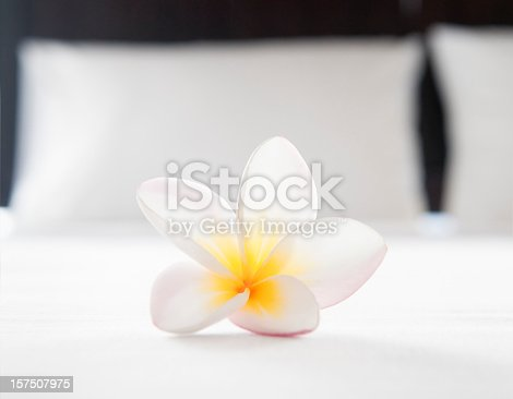 A single frangipani flower on the sheets in a hotel room.