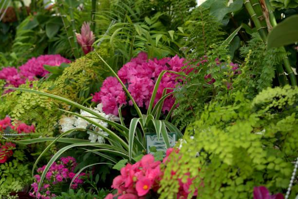 Flores e folha da estufa - foto de acervo