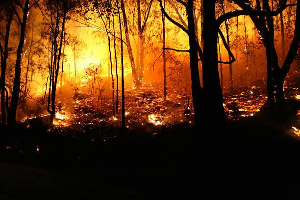 hotter - bosbrand stockfoto's en -beelden