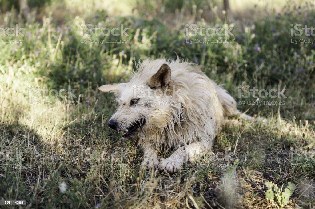 Hound dog vegetation stock photo