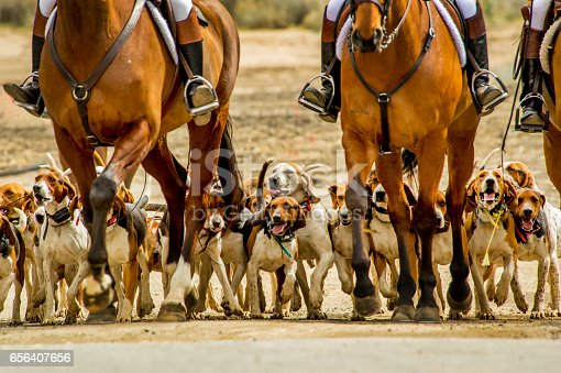 Hunting hounds and horses.