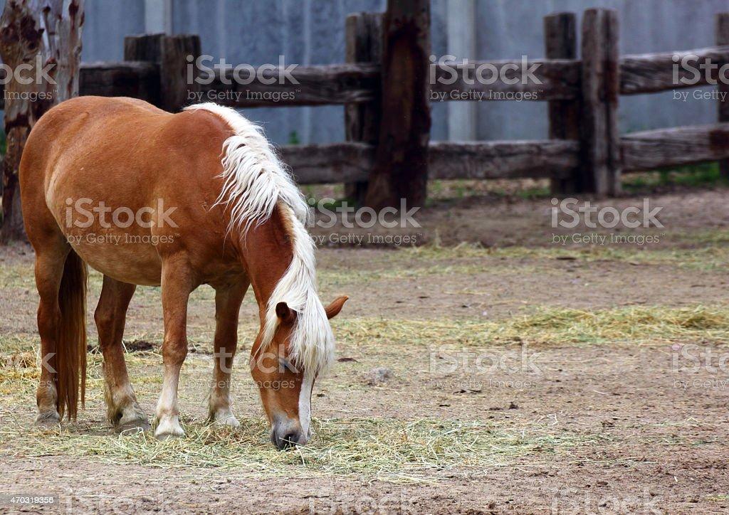 Hourse on the farm stock photo