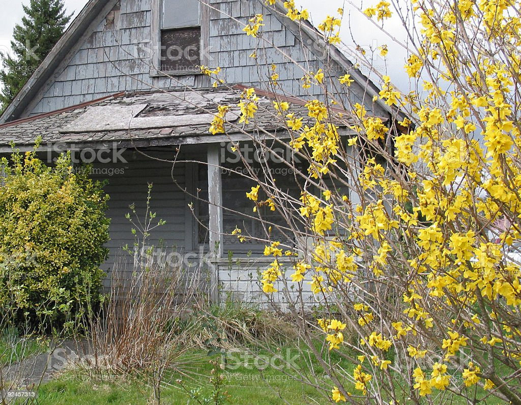 House and Forsythia stock photo