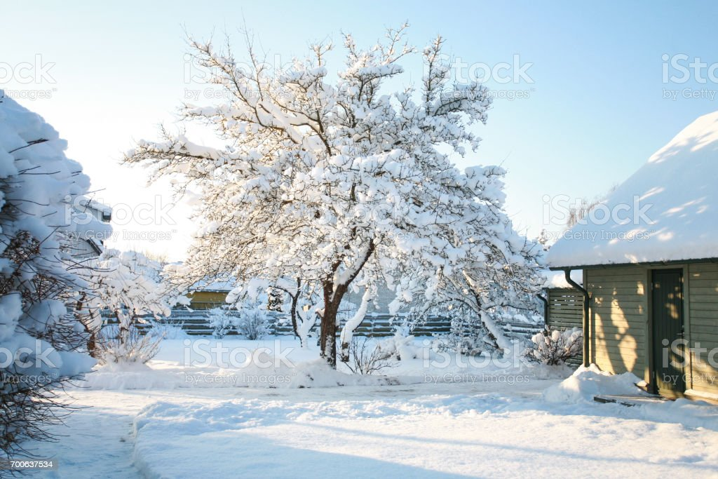 Haus und Garten Bäume mit Schnee bedeckt an einem kalten, sonnigen Wintertag mit klaren, blauen, azurblauen Himmel Lizenzfreies stock-foto
