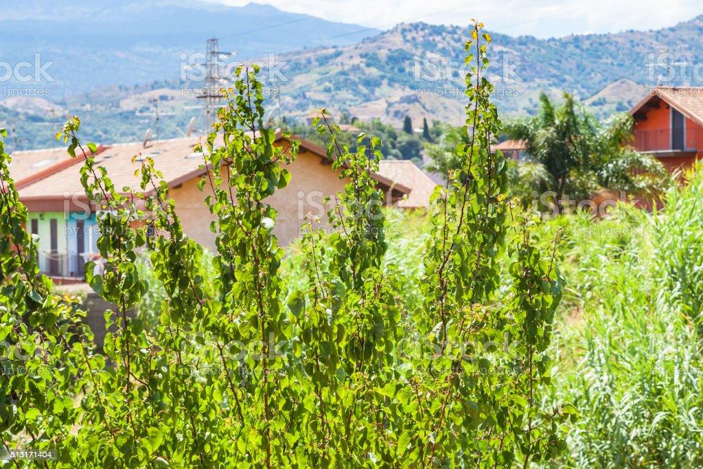 house and green garden in Giardini Naxos town stock photo