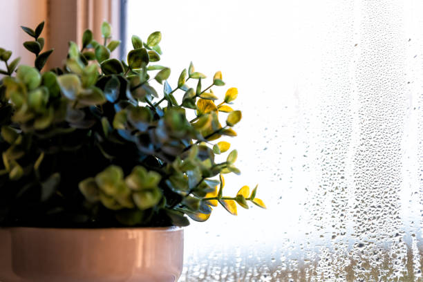 House bathroom or bedroom room window decoration decor with green flowerpot potted plant home interior with wet window from rain and drops stock photo