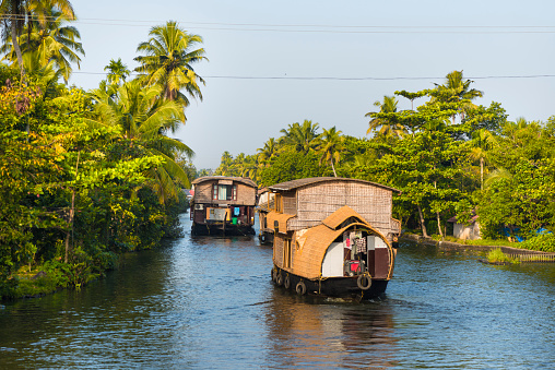 Many house boats sail down the river in backwaters against palms background and blue sky In Alappey, Kerala, India. Kerala state, with a large network of inland canals earning it the sobriquet \