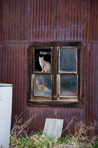 House Cat Sitting in Old Window Frame stock photo
