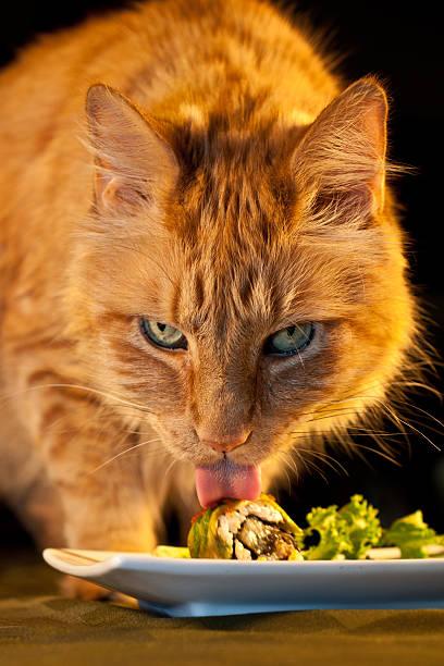 House cat stealing sushi picture id156423702?b=1&k=6&m=156423702&s=612x612&w=0&h=o3twmyba04rfnqcex6vetiqkb3p2zh0w7dzsgtdubho=