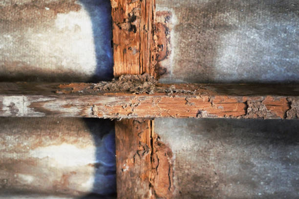 woningbouw met termieten schade - termietenheuvel stockfoto's en -beelden