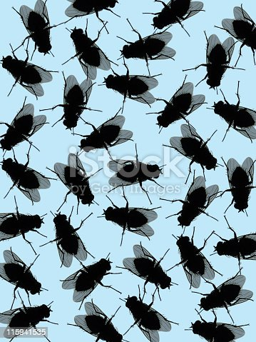 House fly background on light blue