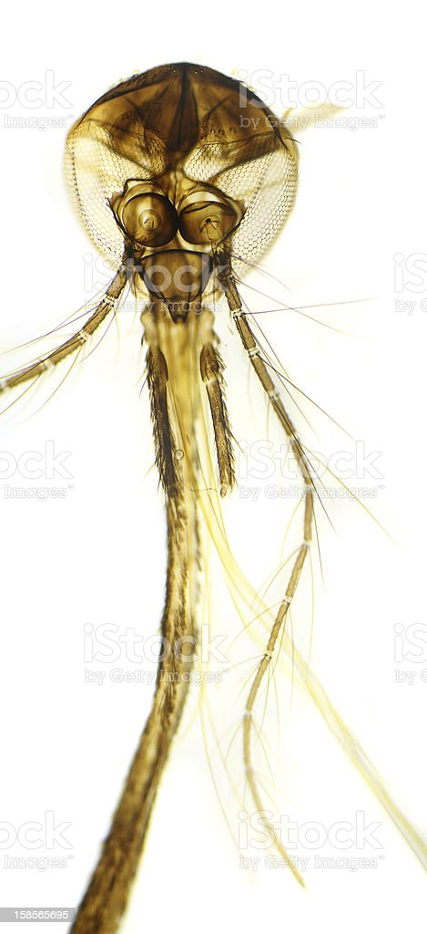 House fly moeth parts royalty-free stock photo
