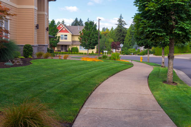 House frontyard and parking strip freshly mowed green grass lawn in North American suburban neighborhood House frontyard and parking strip freshly mowed green grass lawn in North American suburban residential neighborhood mowing stock pictures, royalty-free photos & images