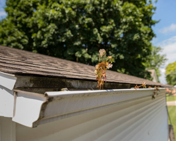 house gutter clogged with tree leaves, sticks, and debris. Tree sapling growing in the mold and mildew covered gutter stock photo