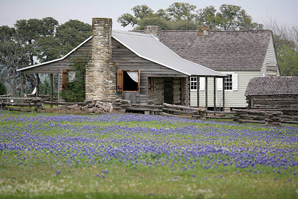 House in bluebonnets  bunnylady stock pictures, royalty-free photos & images