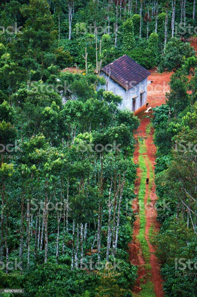 House in green garden stock photo