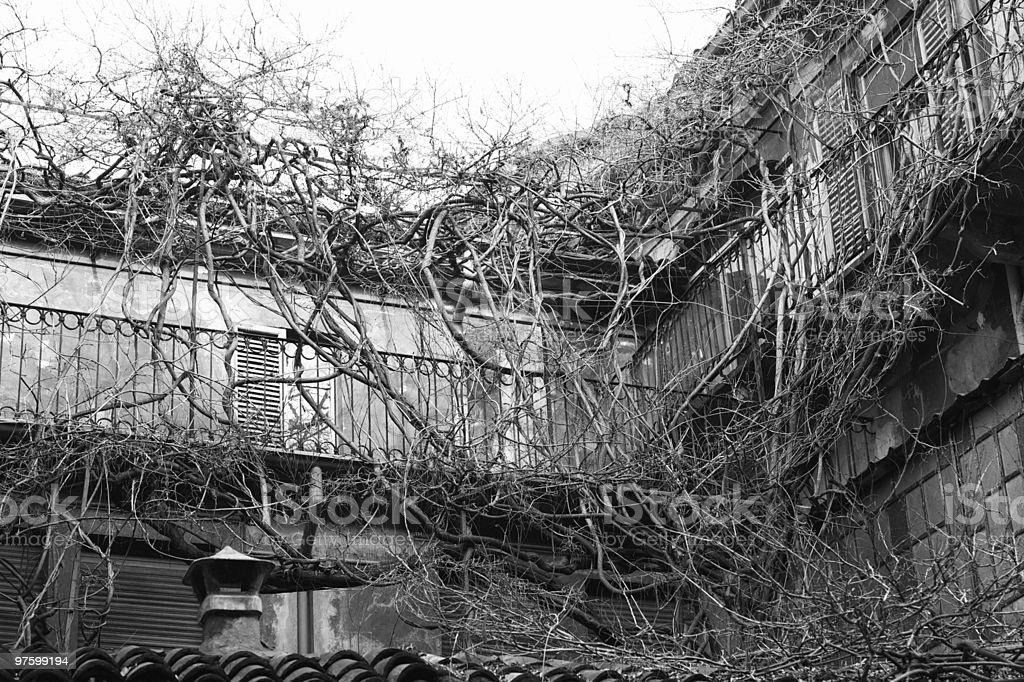 House in prison of the ivy royaltyfri bildbanksbilder