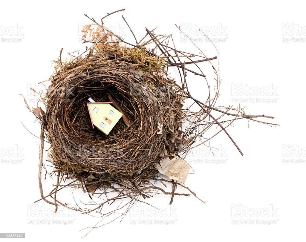 House in the nest stock photo