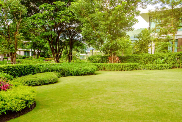 House in the park, Green lawn, front yard is beautifully designed garden House in the park, Green lawn, front yard is beautifully designed garden, Flowers in the garden, Green grass, Modern house with beautiful landscaped front yard, Lawn and garden blur background. grounds stock pictures, royalty-free photos & images