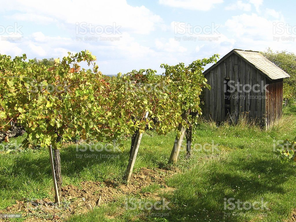 House in the vineyards stock photo
