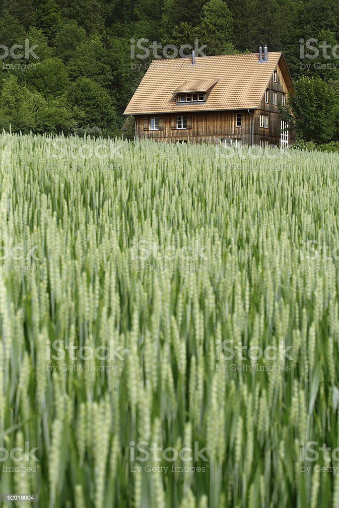 House in the wheat field royalty-free stock photo