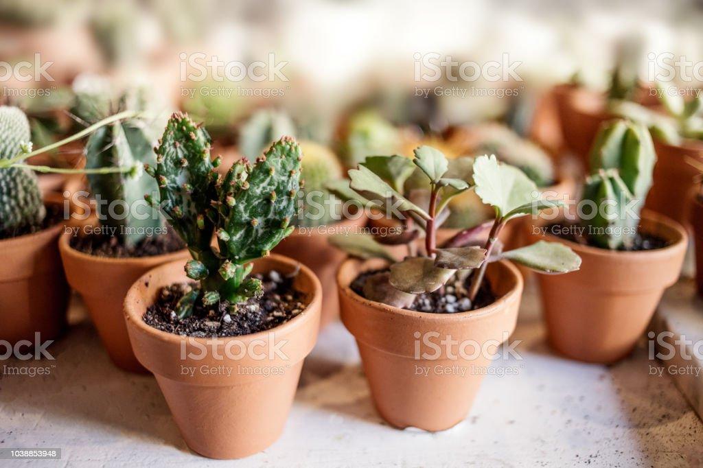 Collection de plantes d'intérieur de maison. Succulentes et cactus en pots différents sur fond blanc - Photo