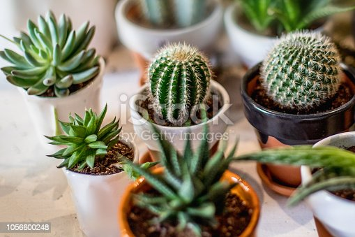 House indoor plants collection. Succulent and cactus in different pots on white background