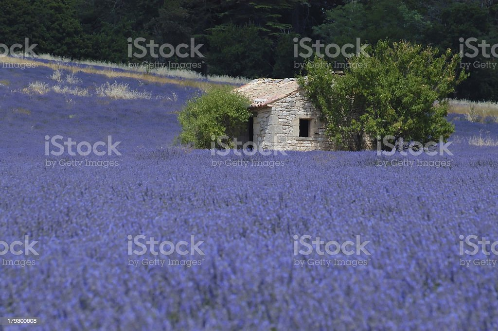 House on lavender field royalty-free stock photo