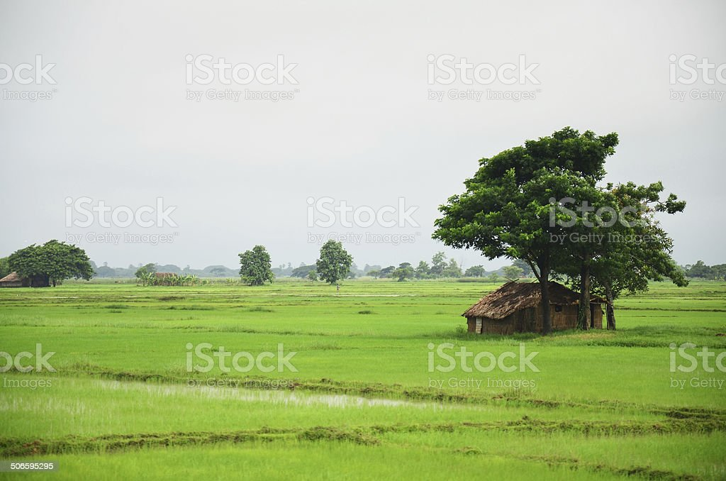 House on paddy field located in Bago, Myanmar stock photo