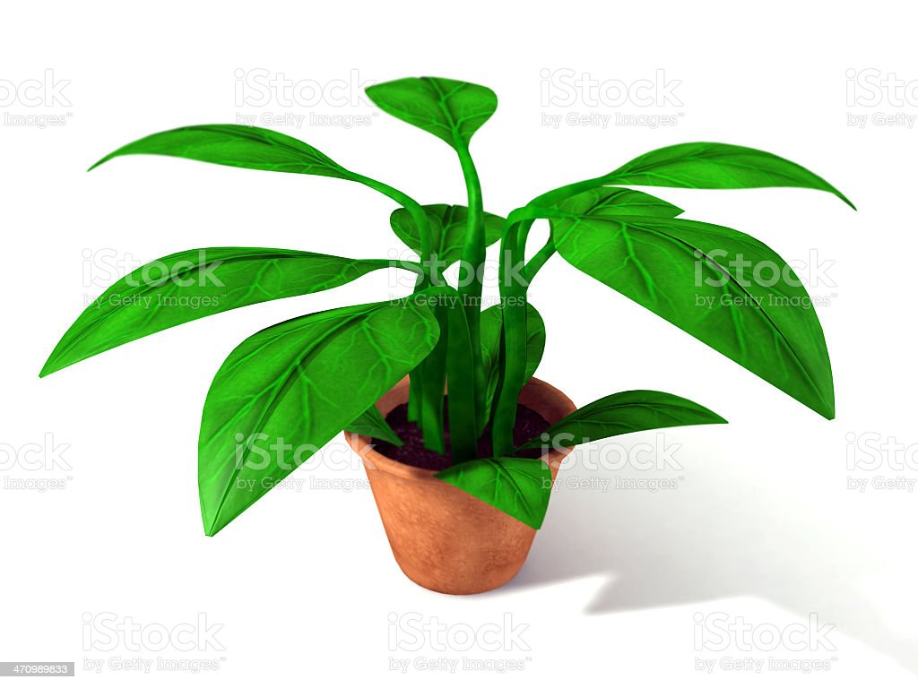 House Plant stock photo