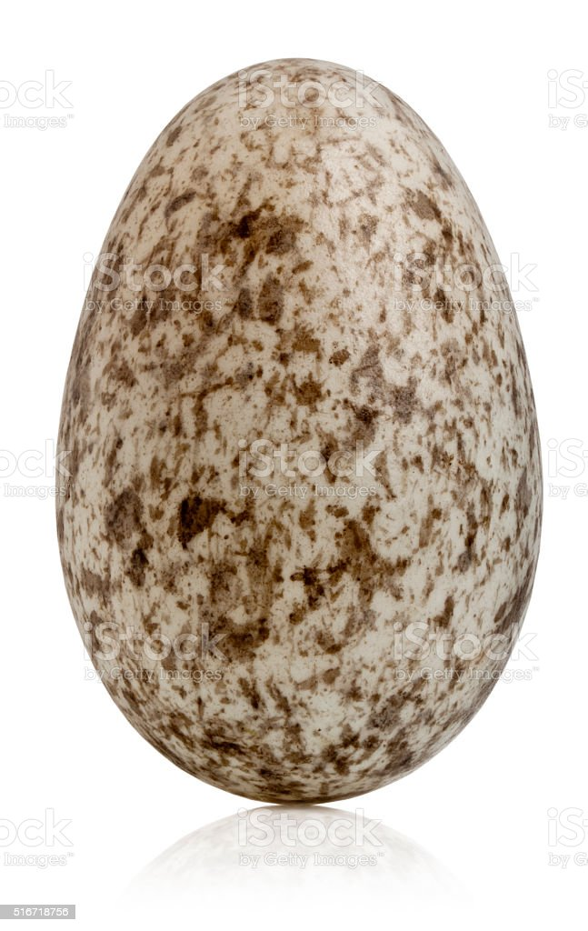 House Sparrow egg, Passer domesticus, in front of white background stock photo
