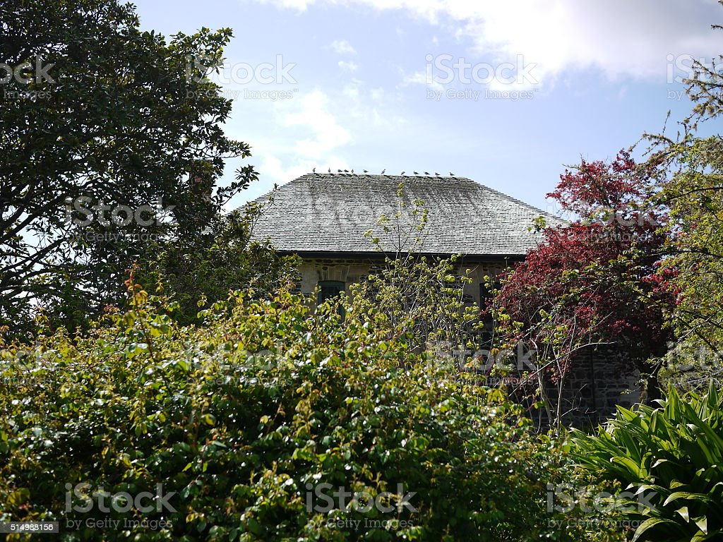 House surronded by trees and little birds stock photo