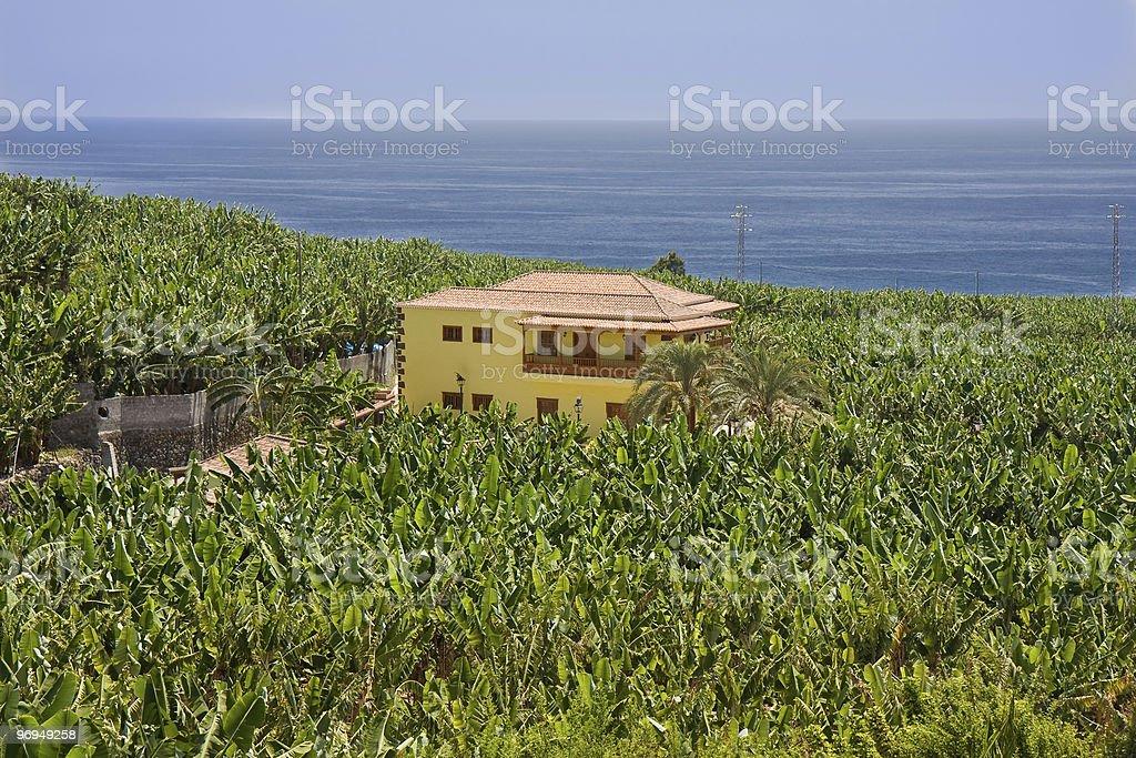 House surrounded by banana plantations at La Palma royalty-free stock photo