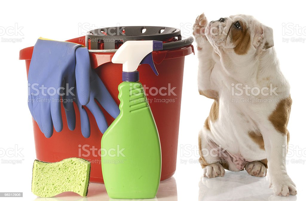 House Training A Puppy Stock Photo More Pictures Of Animal Istock