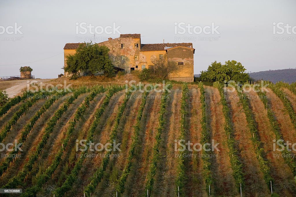 A house with an Italian vineyard with lush foliage royalty-free stock photo