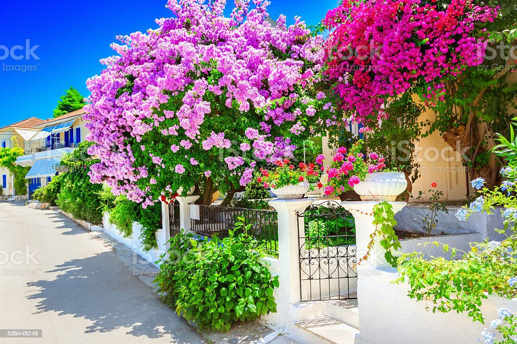 House with bougainvillea stock photo