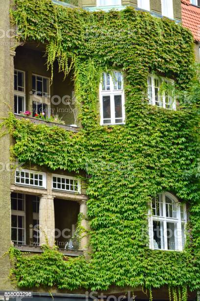House With Green Walls As Vertical Garden Stock Photo Download Image Now Istock