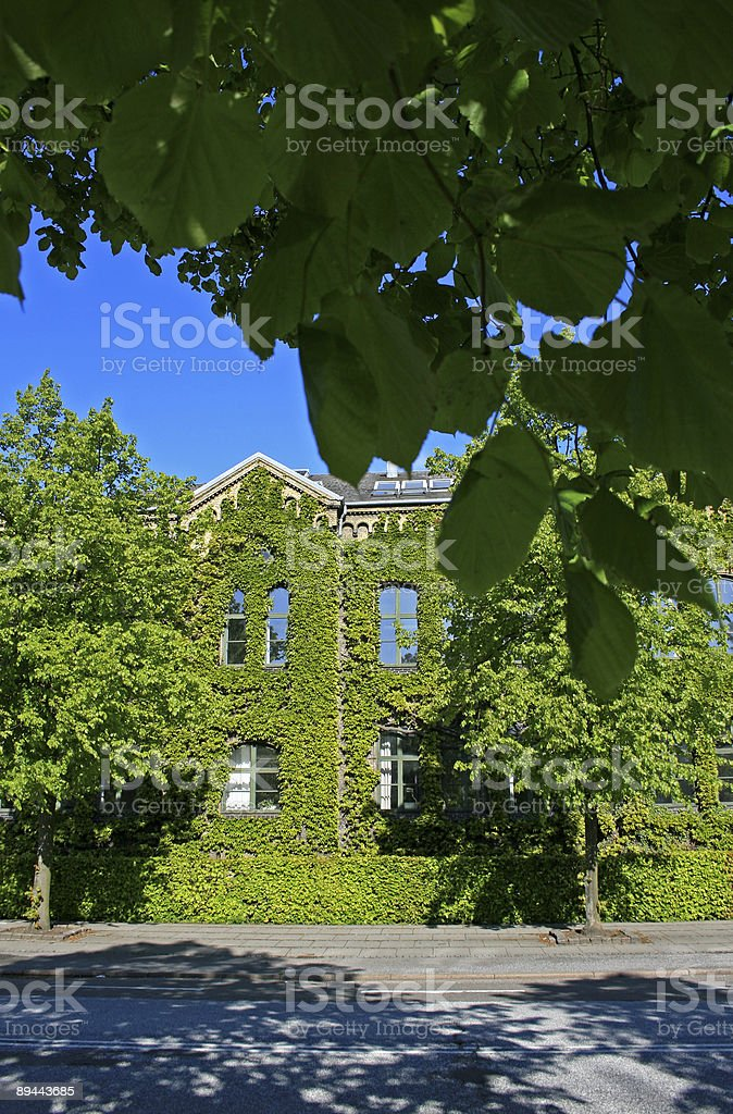 House with plants growing on it royalty-free stock photo