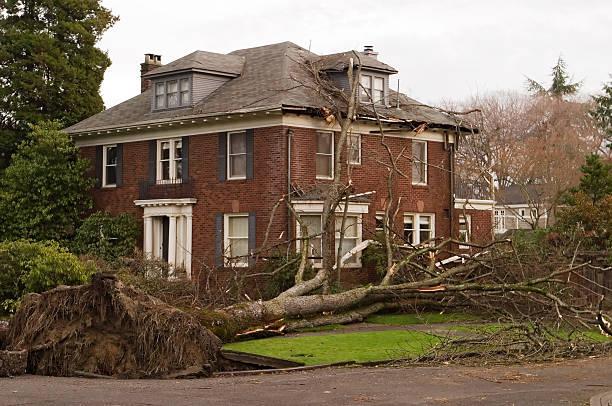 Haus mit Baum Schäden – Foto