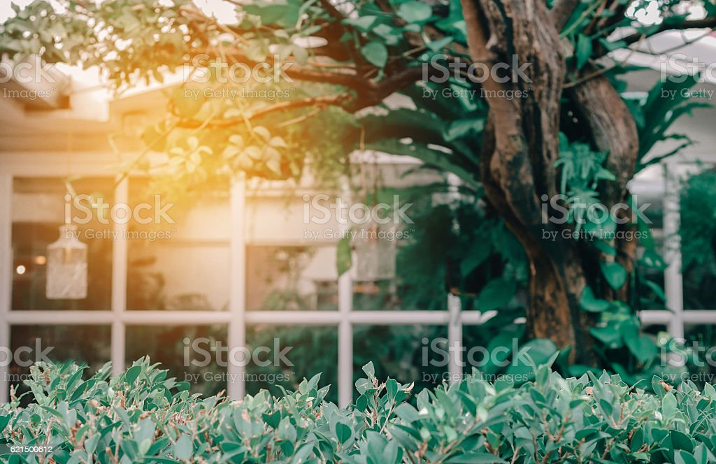 House With Windows Surrounded By Tree. Blurred Background With F photo libre de droits